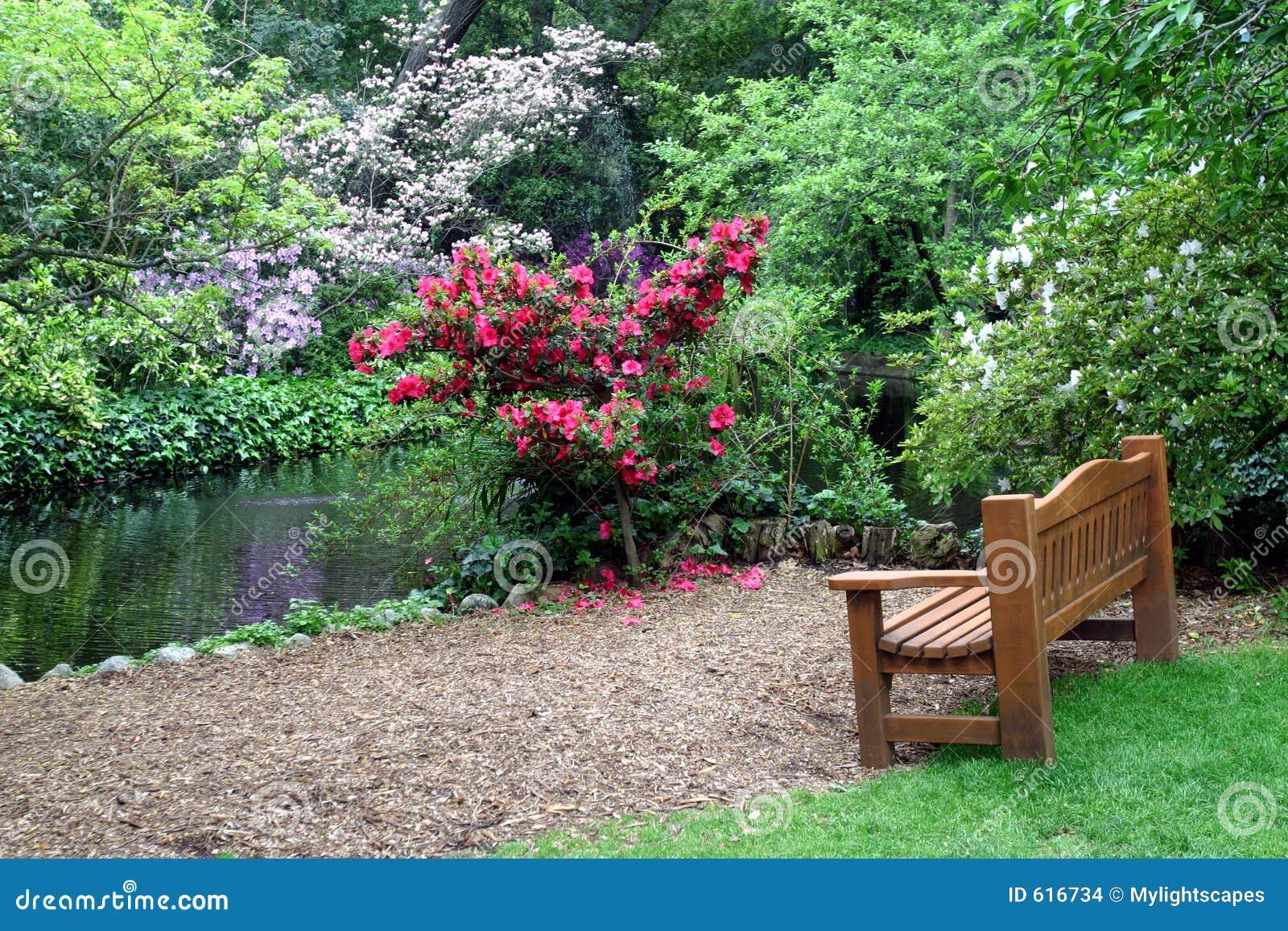 banco vazio pela lagoa no jardim asiático com mola floresce