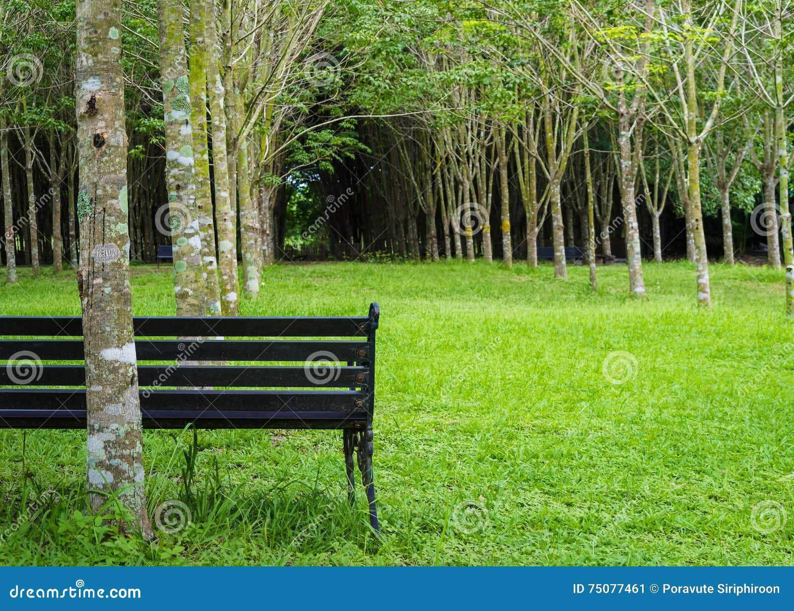 Banco solo del vintage en jardín del color verde