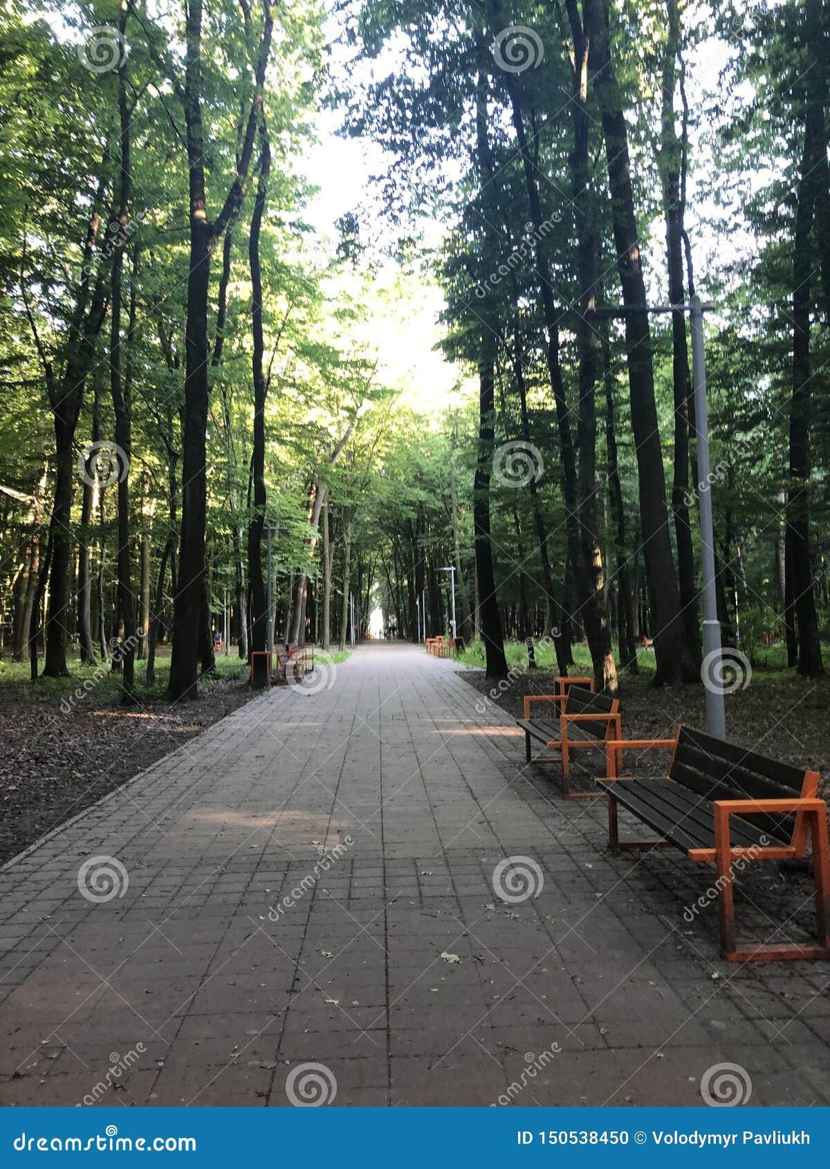 Bancos debajo de los árboles del parque de Stryi en Lviv