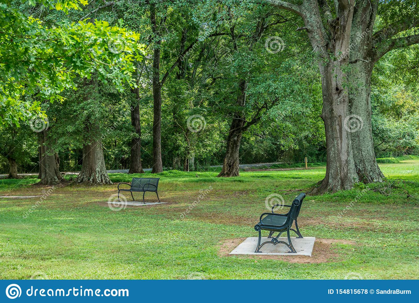Bancos en un parque por los árboles de sombra