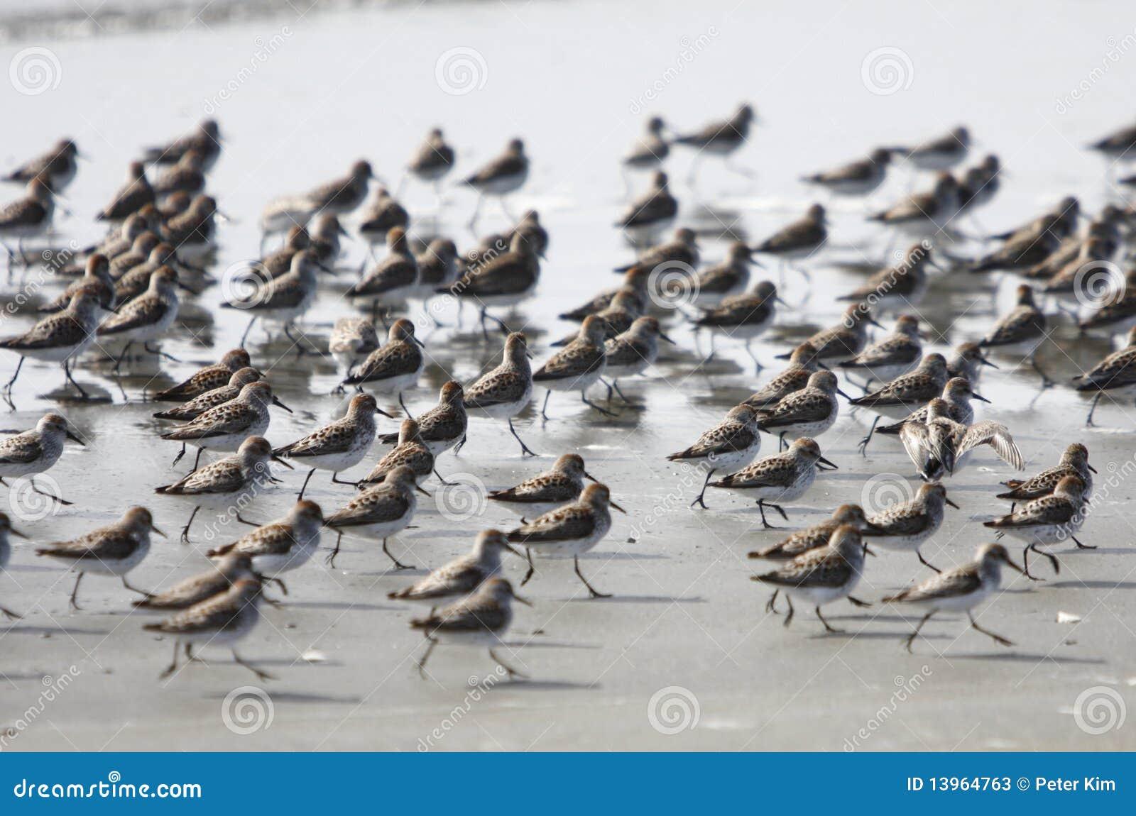 Bande d oiseaux