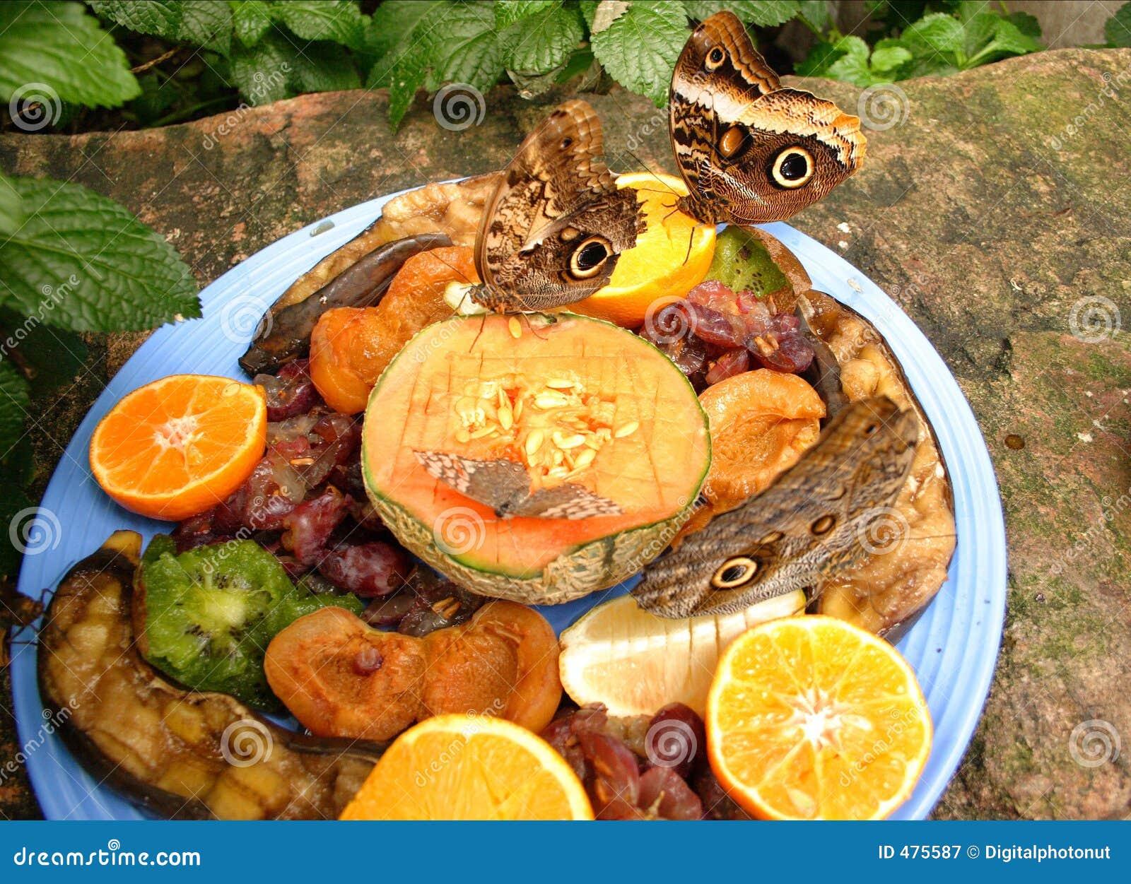 Bande de guindineaux au fruit