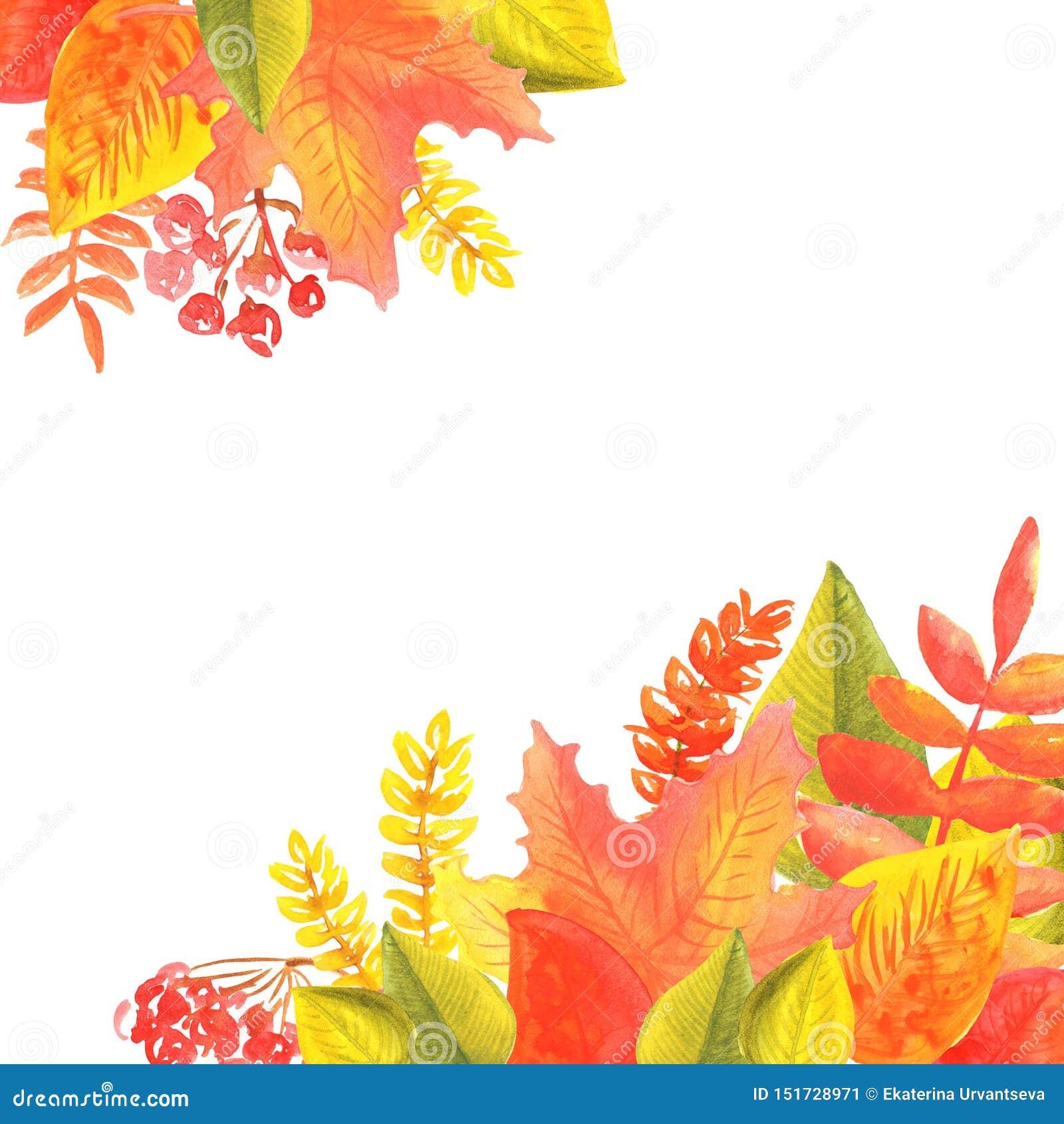 Bandeira da aquarela das folhas e dos ramos isolados no fundo branco Ilustração do outono para cartões