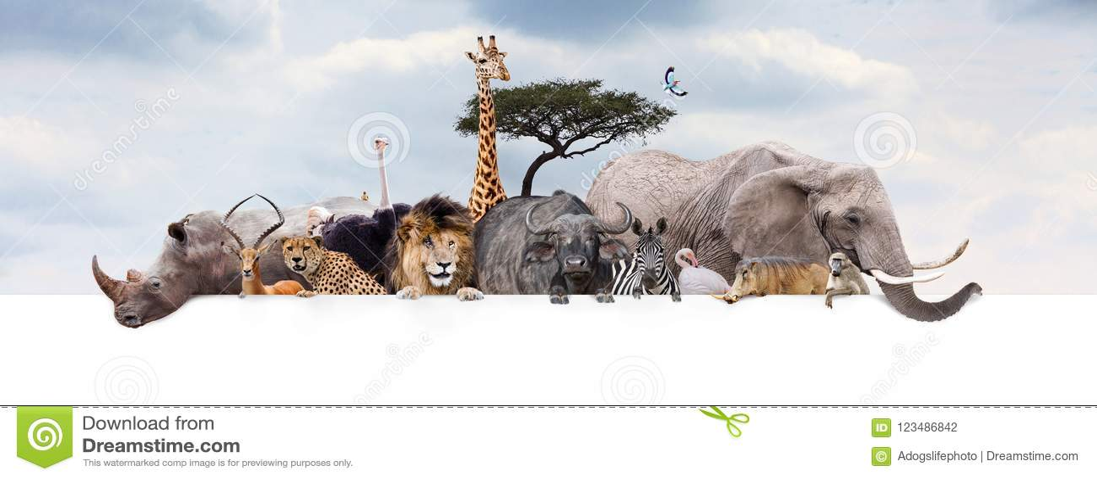 Bandeira de Safari Zoo Animals Over Web