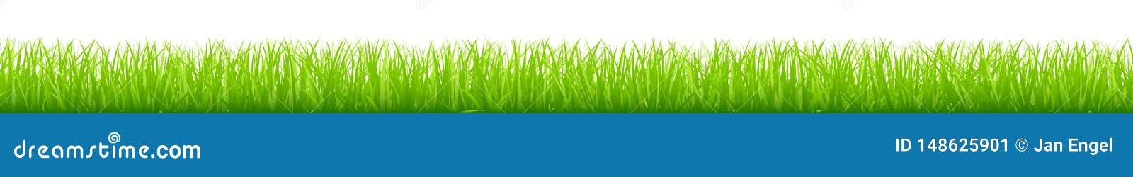 Bandeira horizontal longa do prado verde reto gráfico