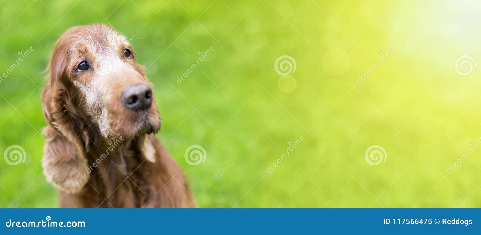 Bandeira velha bonita da Web do cão