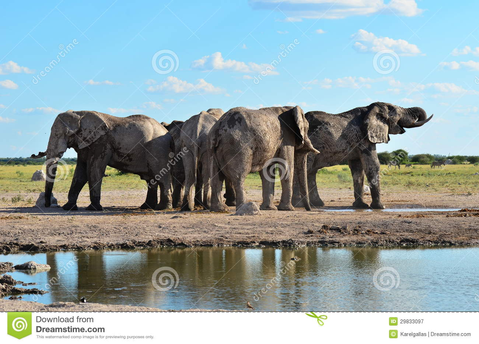 Elefantes da bandeja de Nxai em Botswana