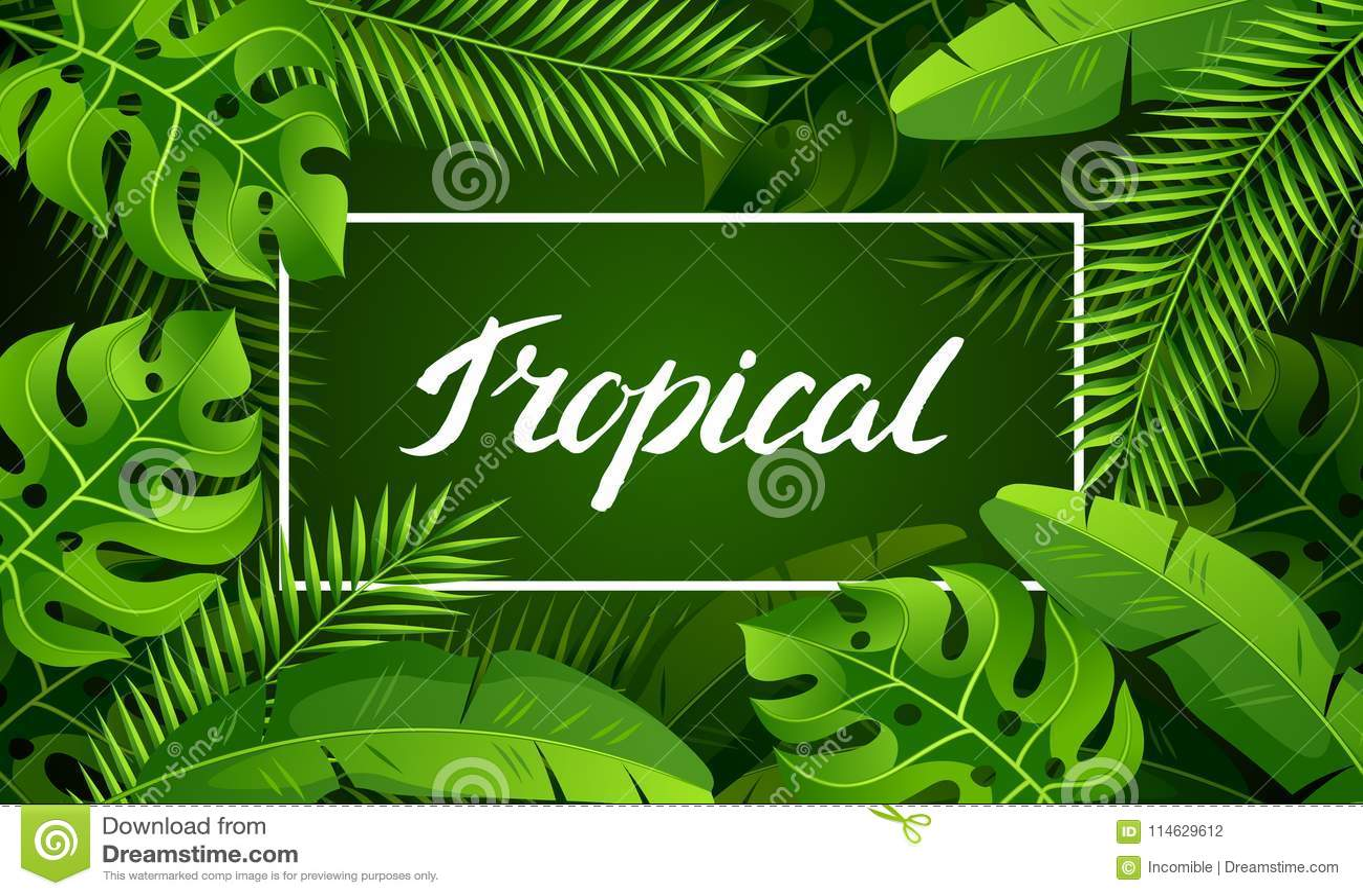 Bandera con las hojas de palma tropicales Plantas tropicales exóticas Ejemplo de la naturaleza de la selva