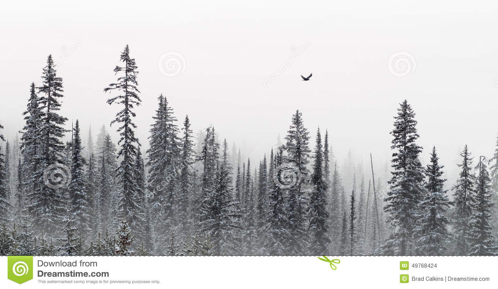 Bandera de los árboles del invierno