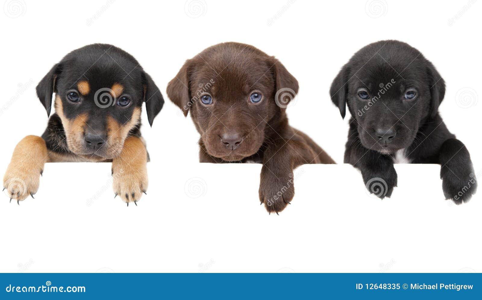 Bandera de los perritos