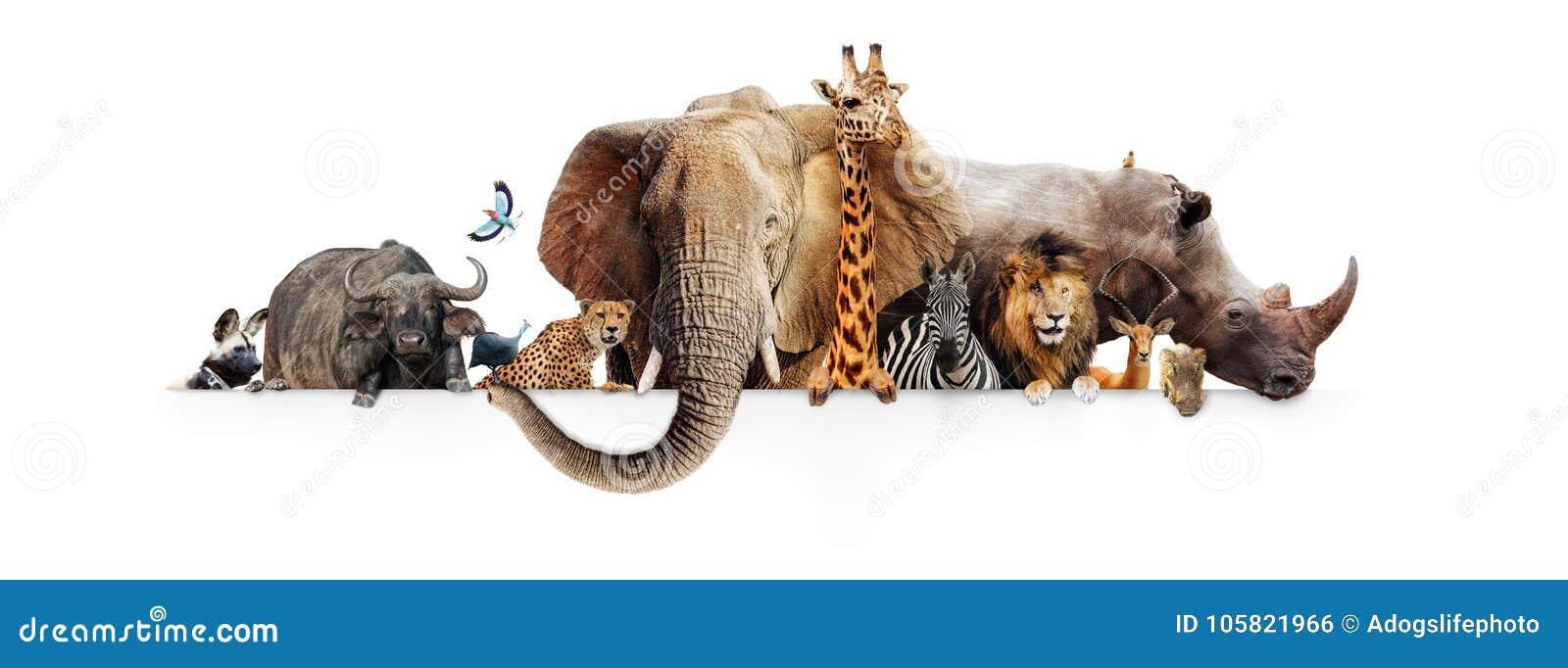 Bandera de Safari Animals Hanging Over White
