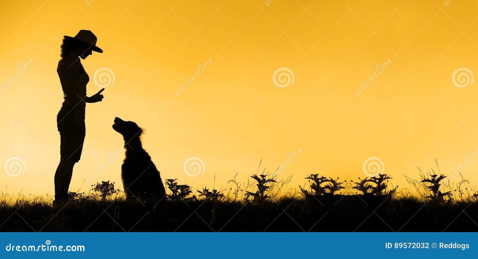 Bandera del entrenamiento del perro