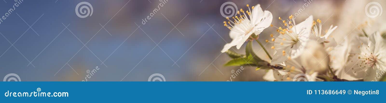 Bandera del flor de la primavera