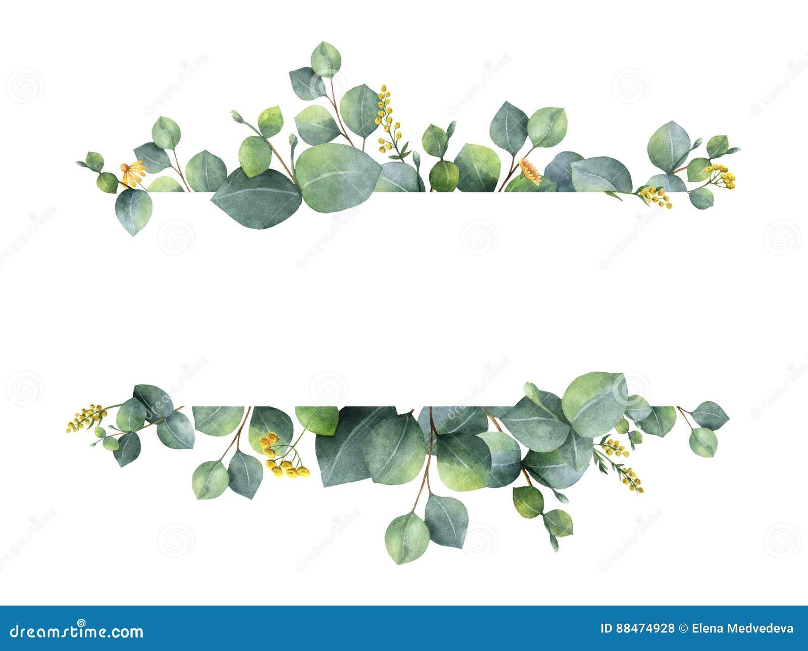 Bandera floral verde de la acuarela con las hojas y las ramas del eucalipto del dólar de plata aisladas en el fondo blanco