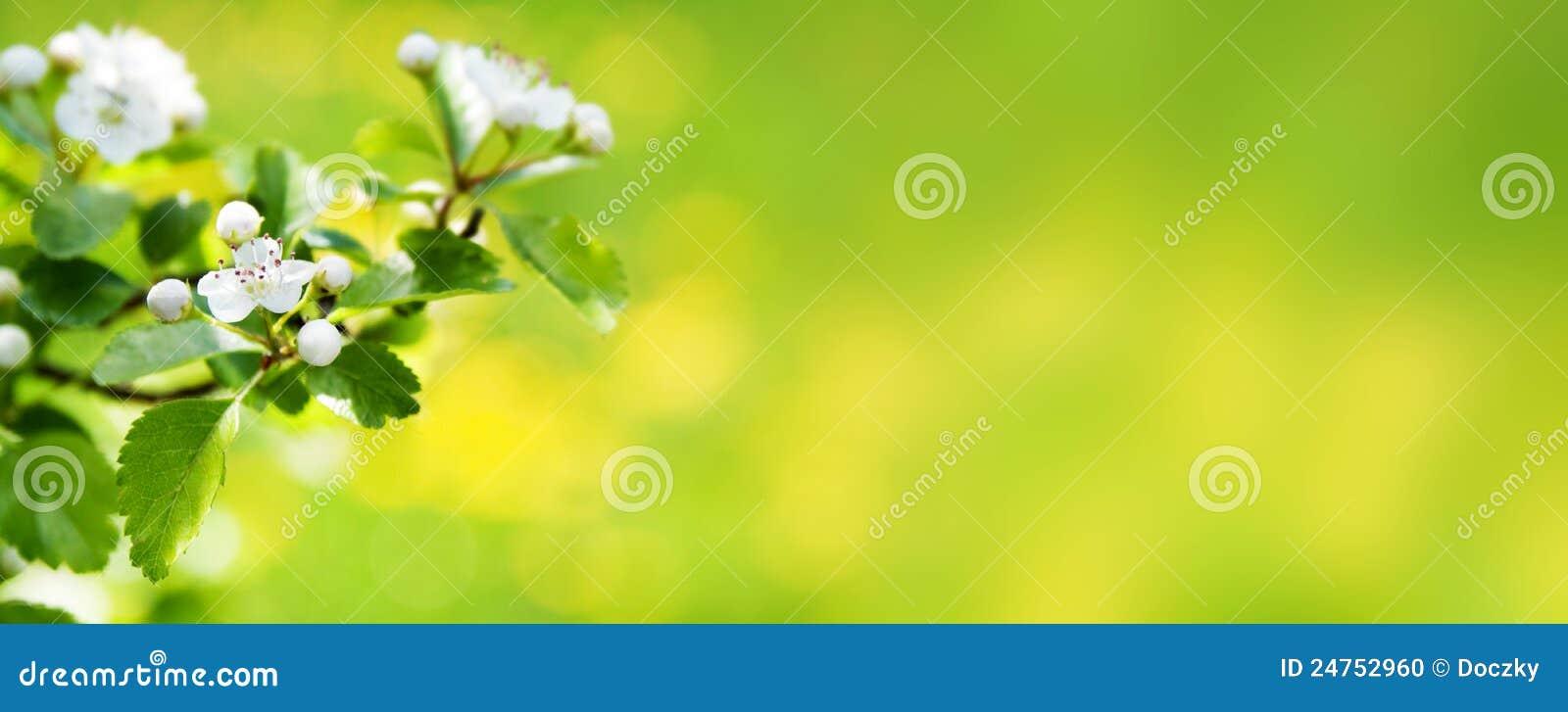 Bandera o cabecera del Web del flor de la naturaleza del resorte.