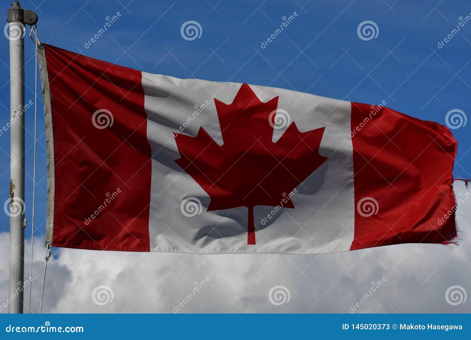 Banderas colombinas canadienses y británicas que agitan orgulloso contra el cielo azul