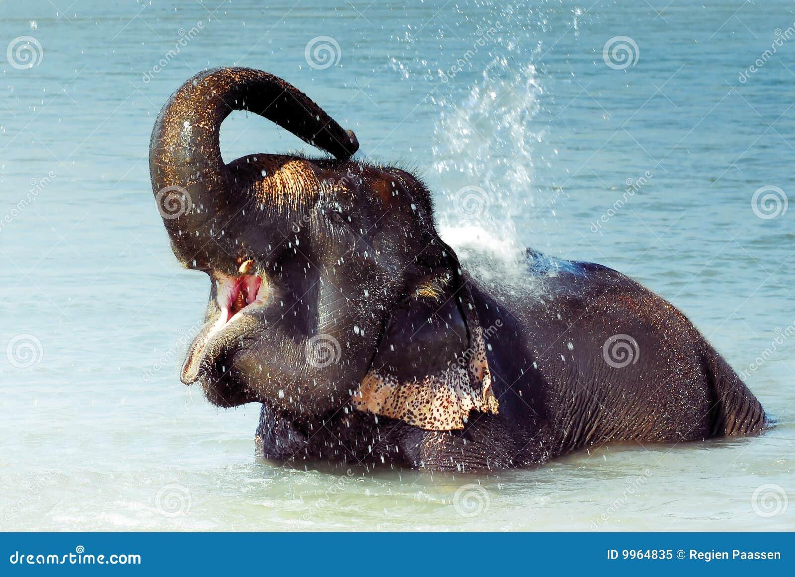 Banhando o elefante
