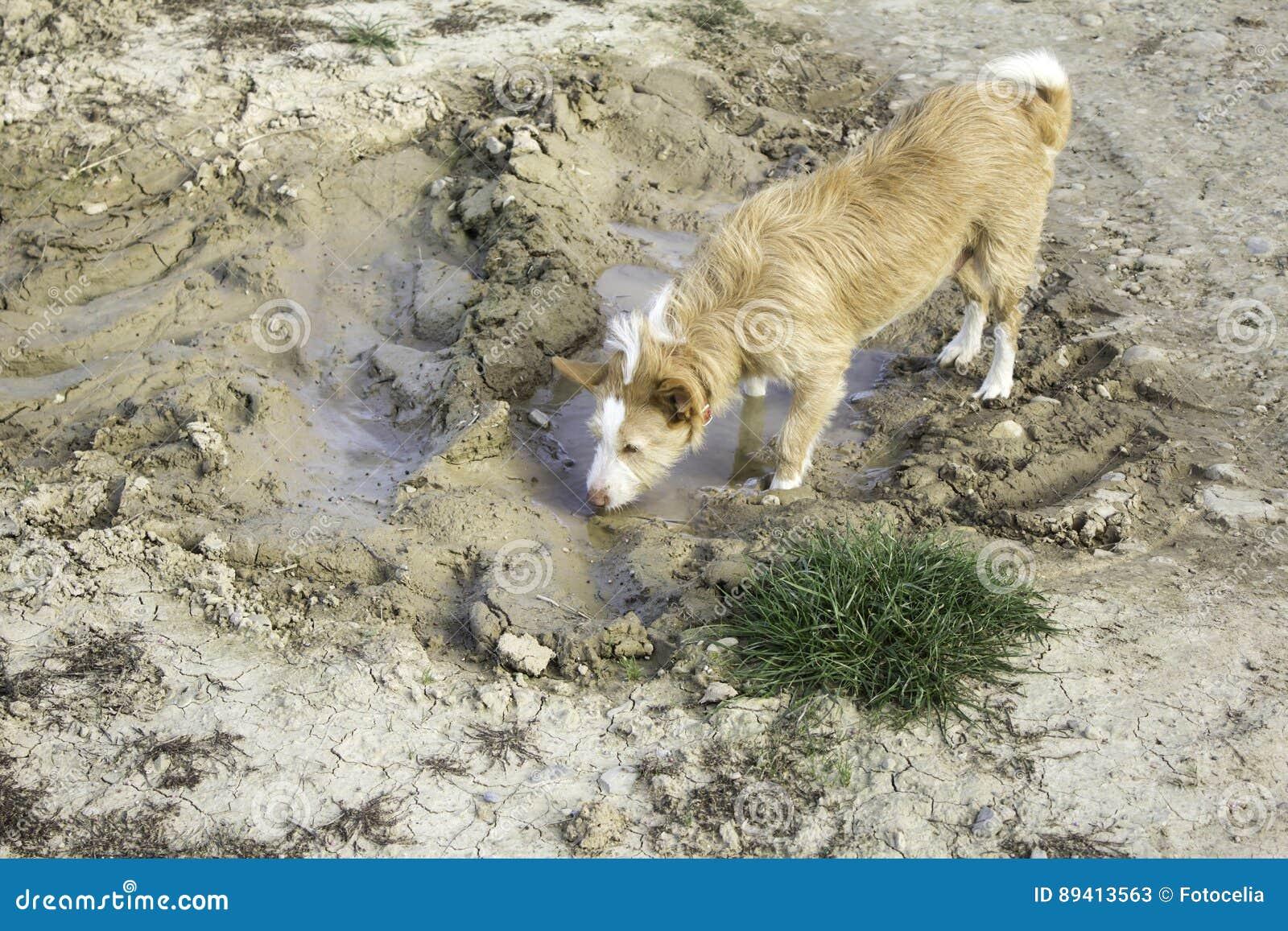 Banho de lama do cão