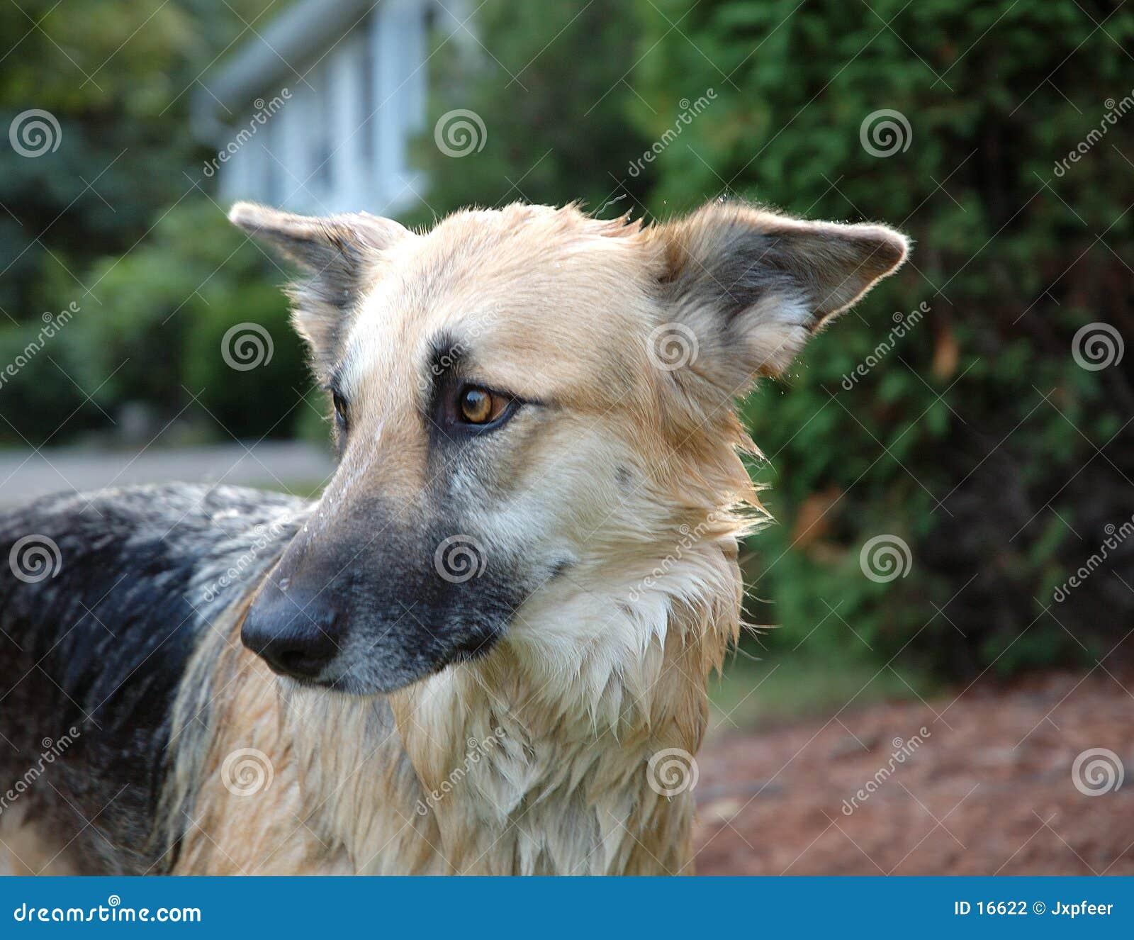 Banho do cão