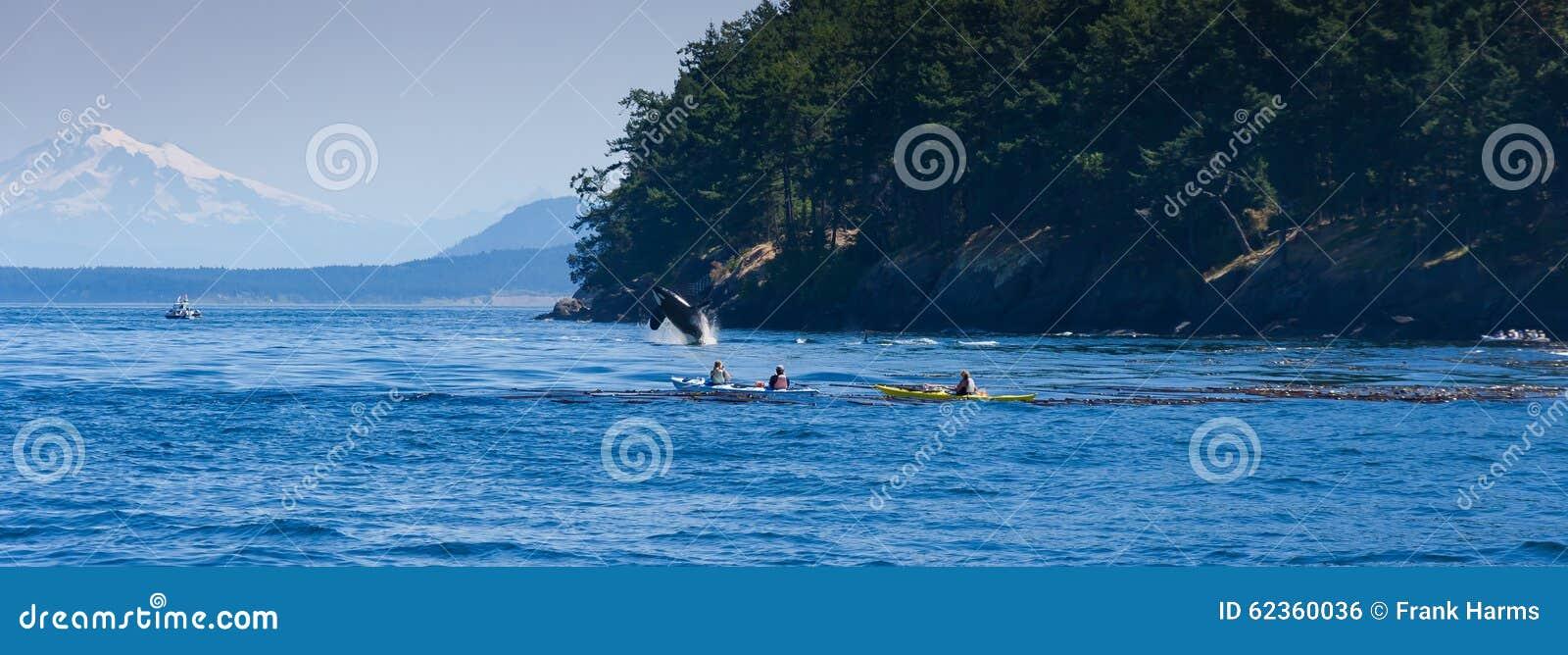 Banhoppningspäckhuggareval nära kanotist