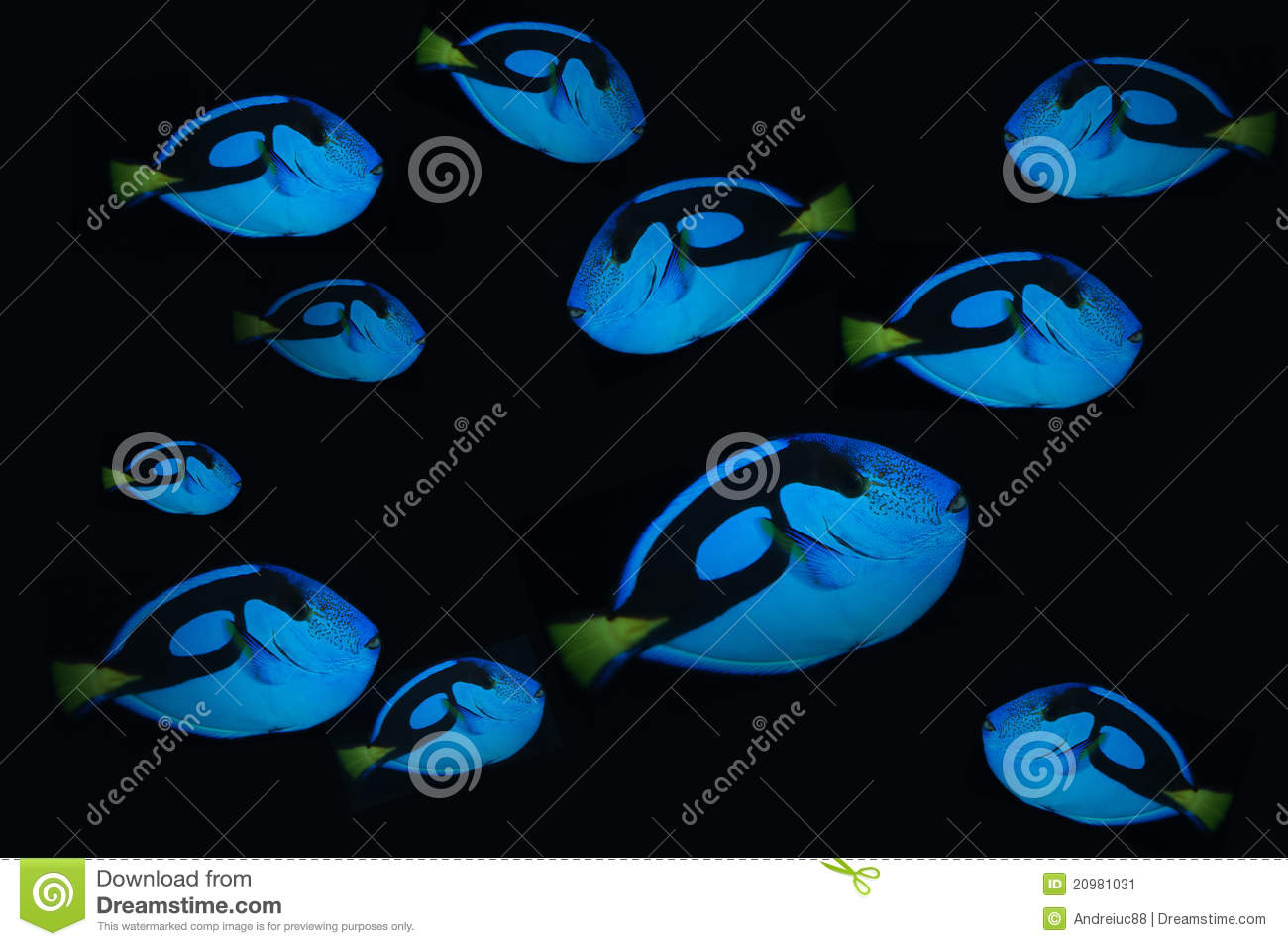 Bank fish stock photos royalty free images for Blue clown fish