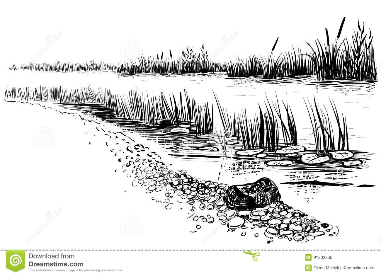 Line Drawing River : Bank of the river or swamp with reed and cattail sketchy