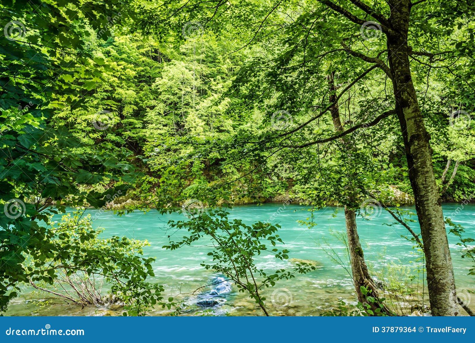 Bank van de het bergrivier en bos