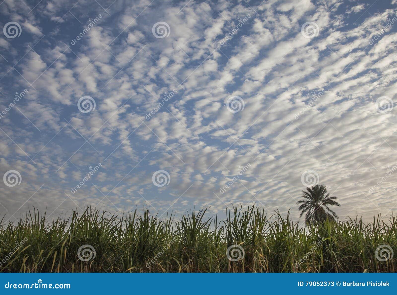 Bankerna av moln i himlen