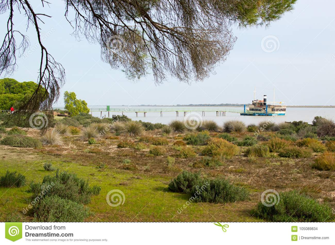 Banks of the Guadalquivir in the Doñana National Park