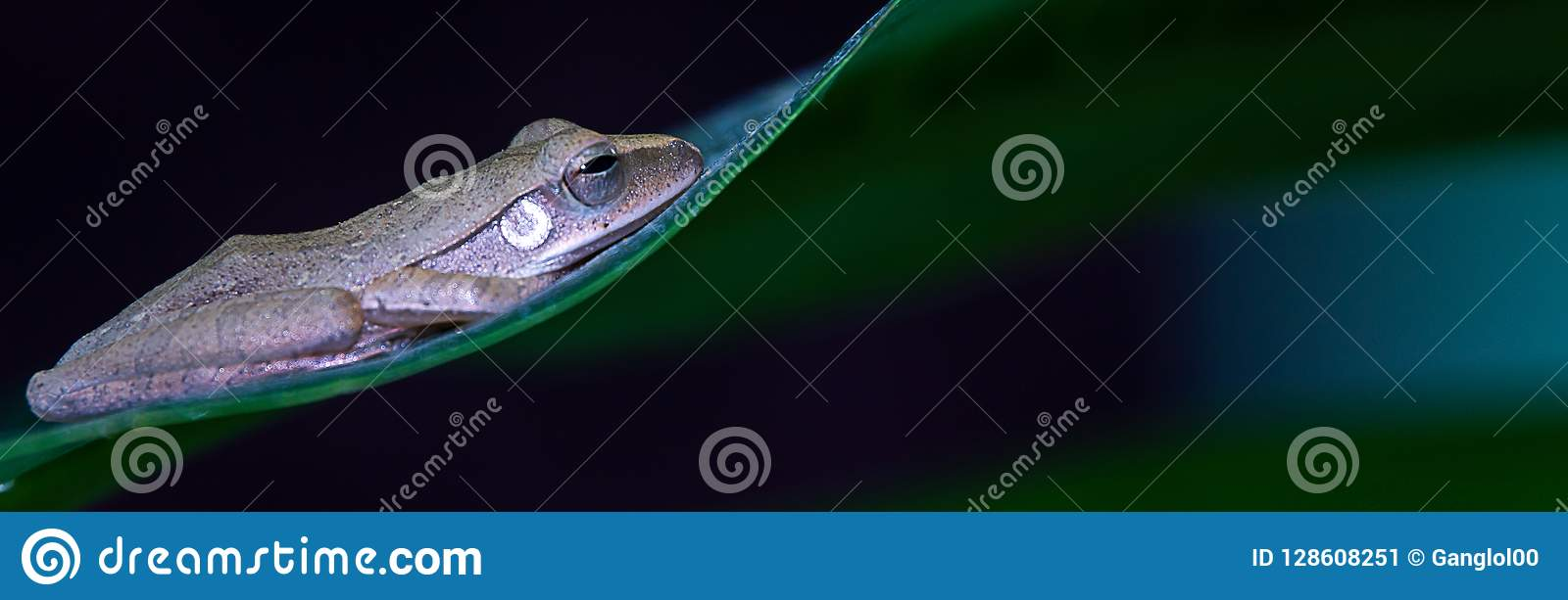 banner background,Frog on the leaf