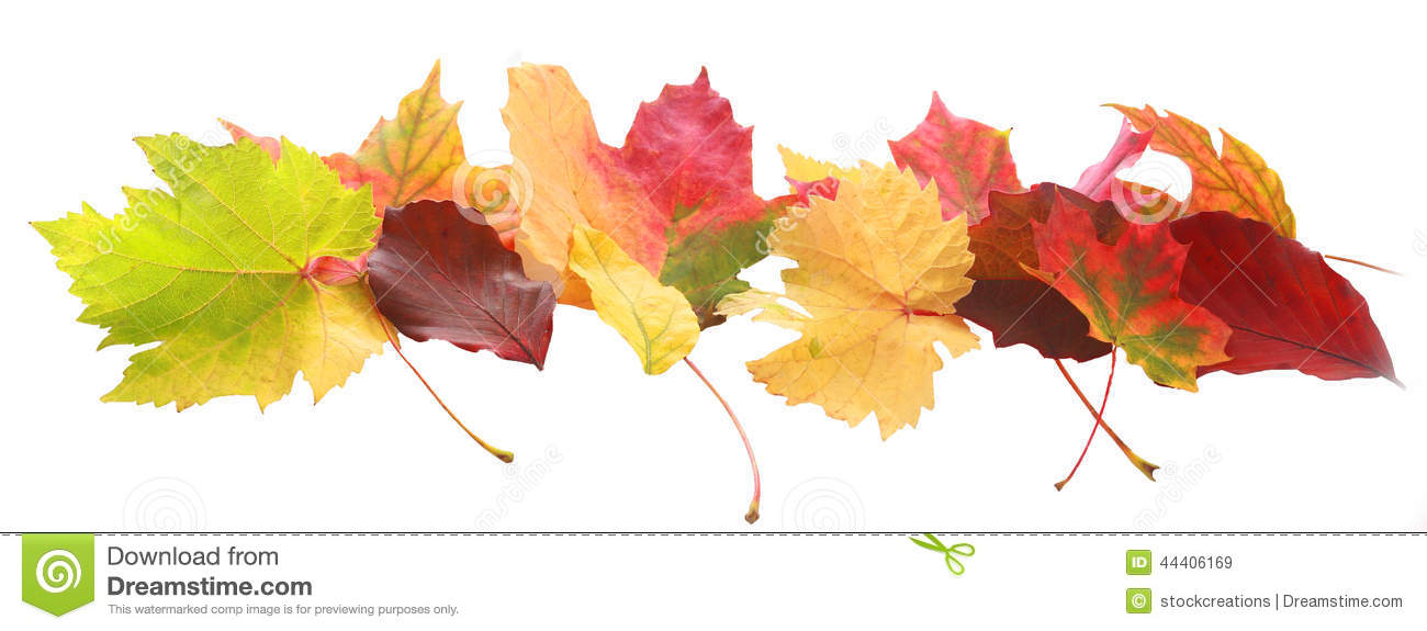 Stock Photo Banner Colorful Autumn Fall Leaves Horizontal Diverse Colors Shapes Showing Changing Seasons Arranged Image44406169 on Four Seasons Clip Art