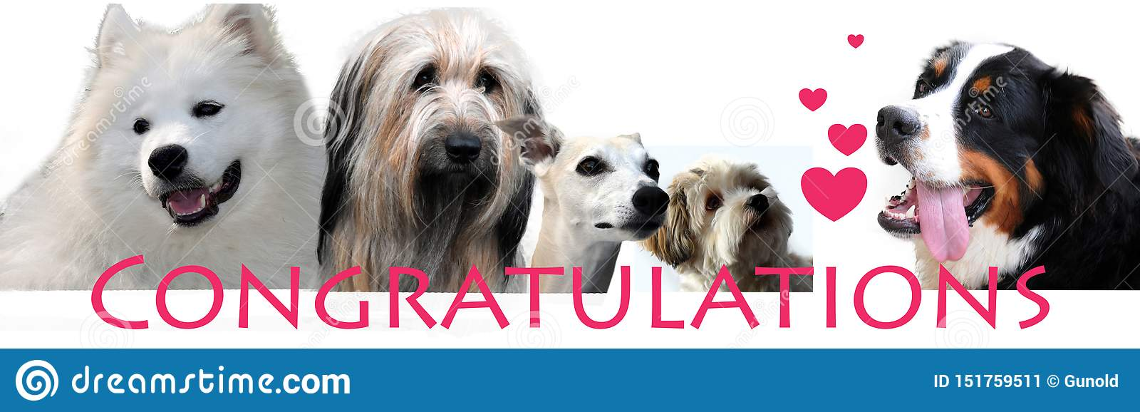 congratulations lettering with different dogs stock image