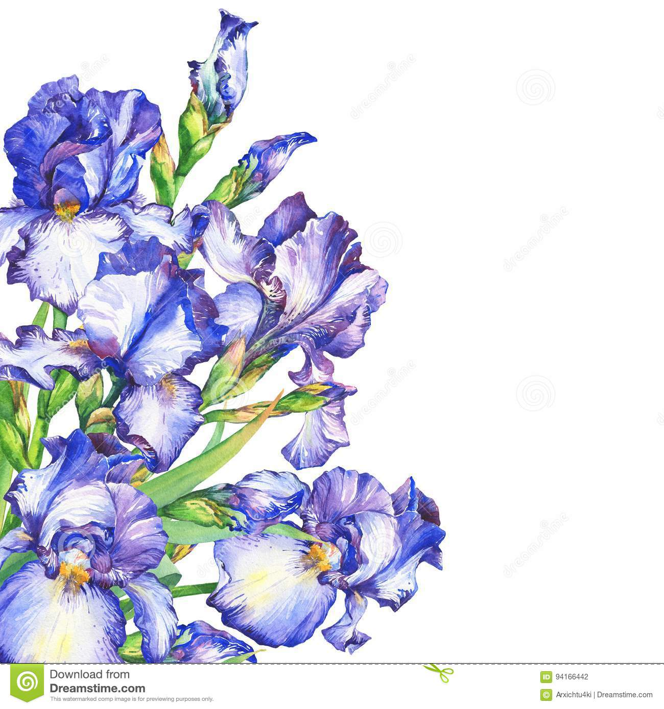 Banner With Flowering Blue And Violet Iris. Stock ...