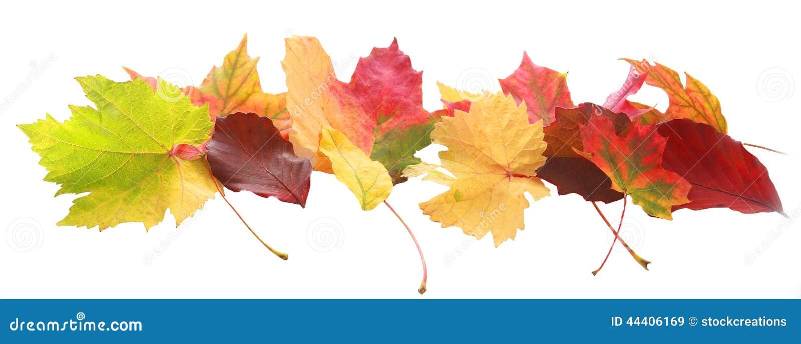 Bannière des feuilles colorées d automne ou de chute
