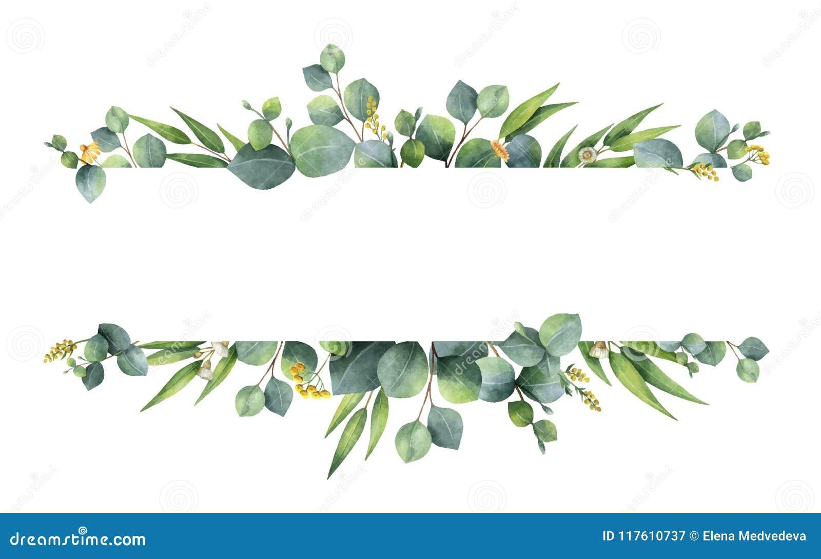 Bannière florale de vert de vecteur d aquarelle avec des feuilles et des branches d eucalyptus de dollar en argent d isolement su