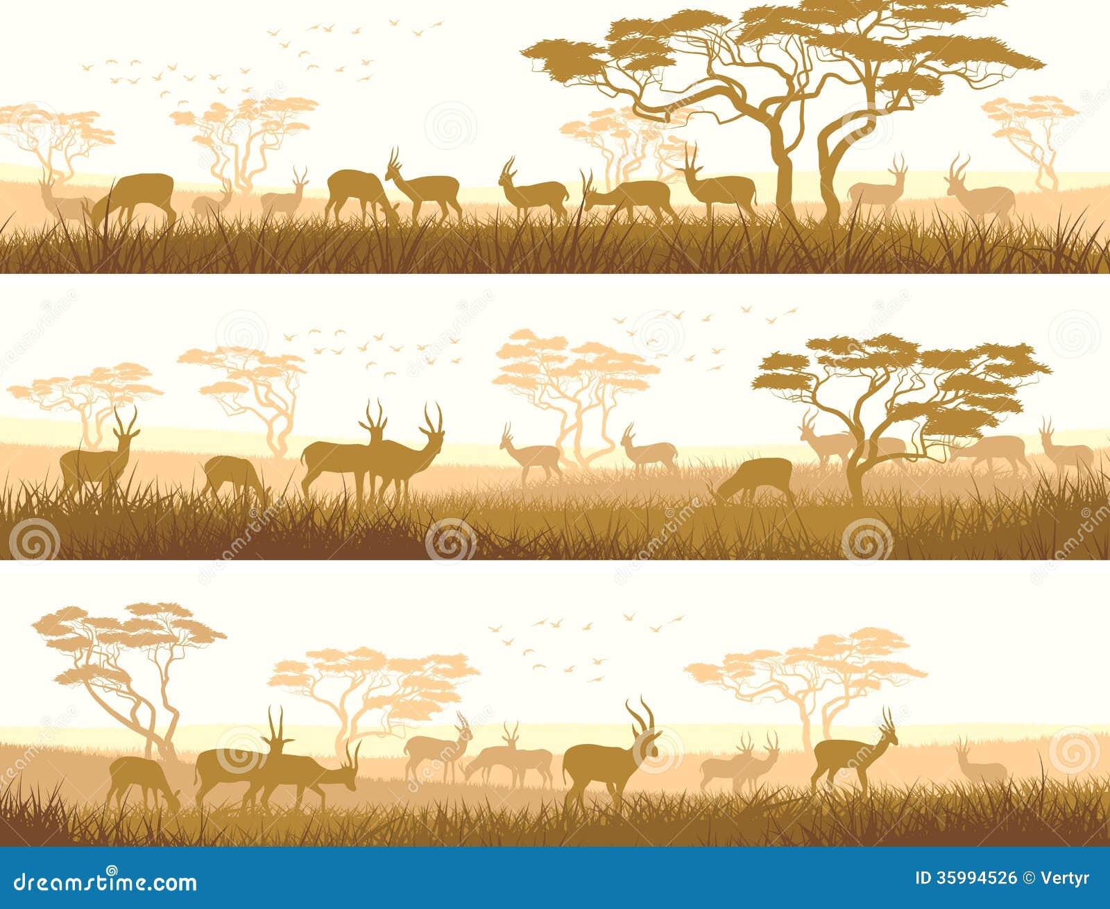 Banni res horizontales des animaux sauvages dans la savane - Images d animaux sauvages gratuites ...