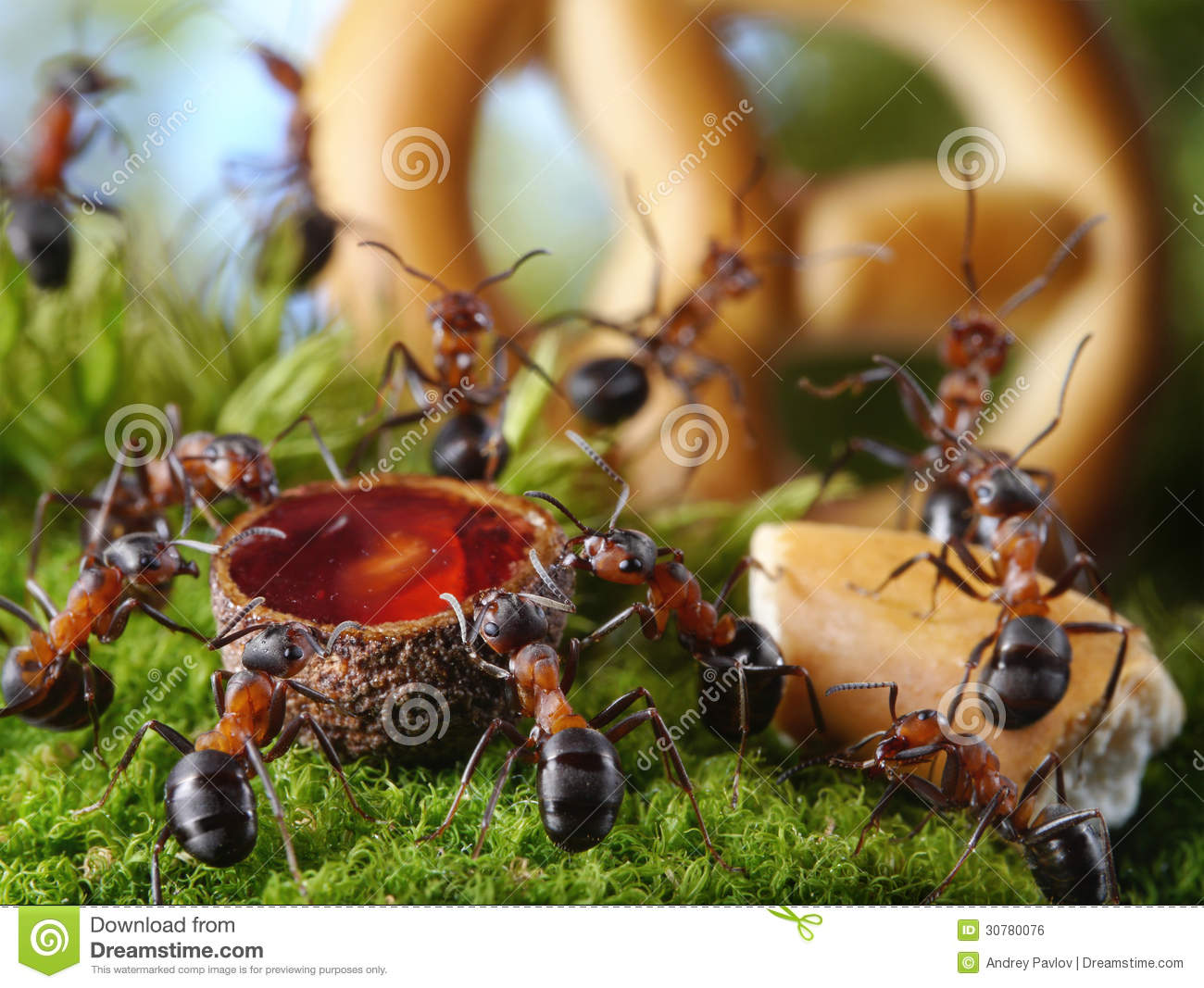 Party In Anthill With Honey And Cake Ant Tales Stock