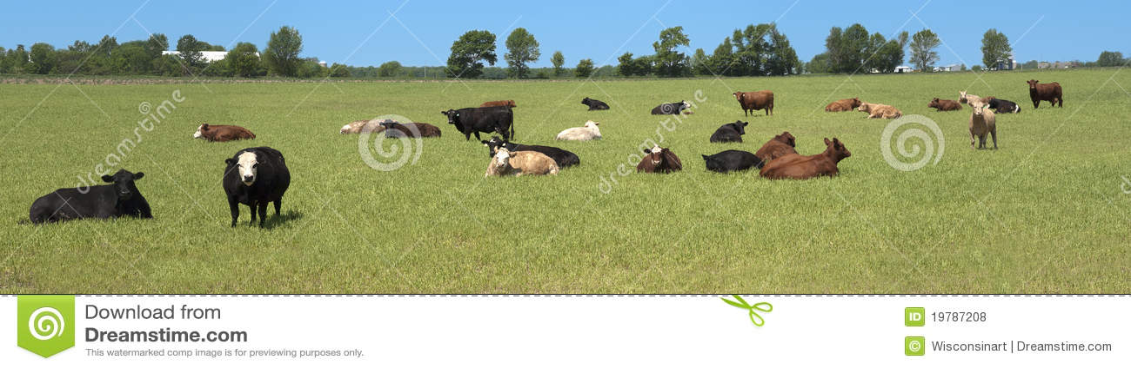 Banret skrämmer den panorama- mejerifältpanoramat betar