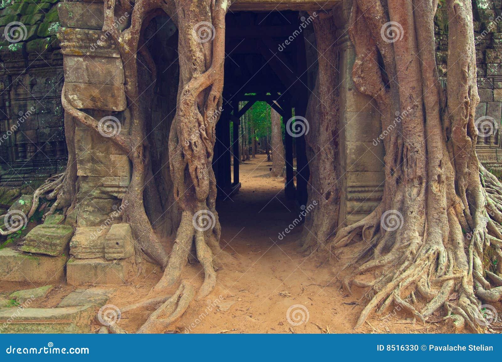 Delicieux Banyan Tree Over The Door From Ta Som. Angkor Wat. Brick, Cambodia.