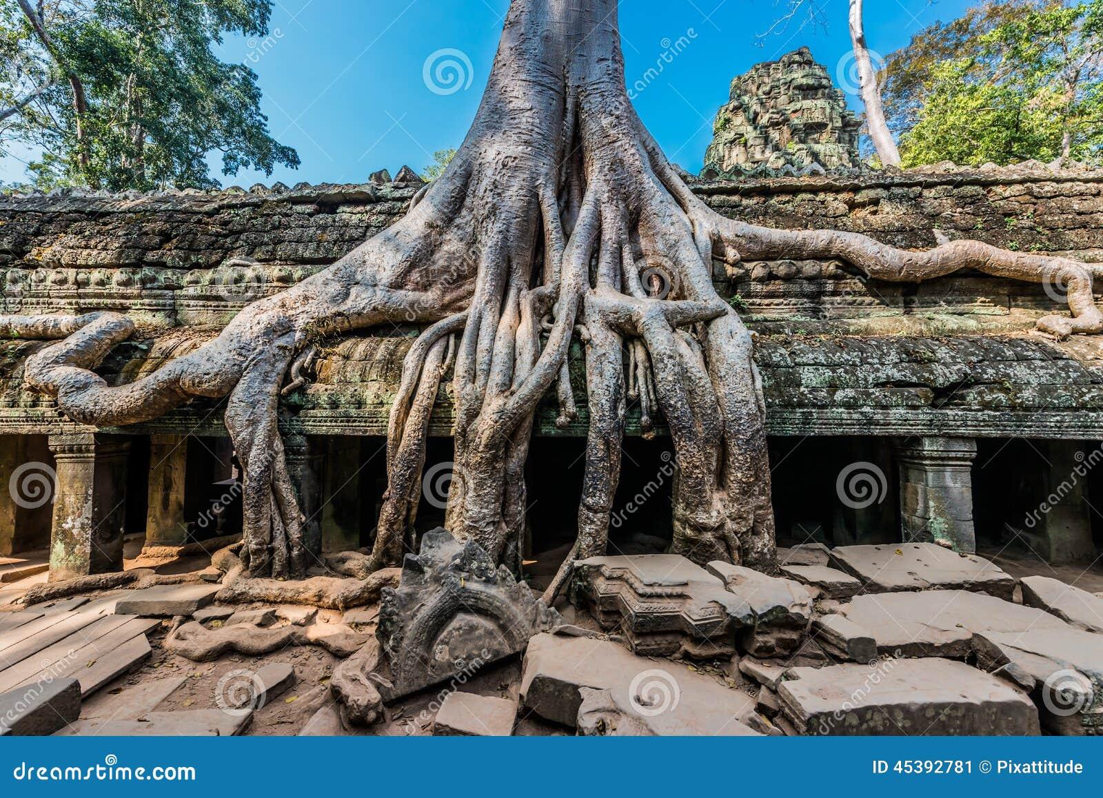 [Jeu] Association d'images - Page 19 Banyan-tree-ta-prohm-angkor-wat-cambodia-ruins-45392781