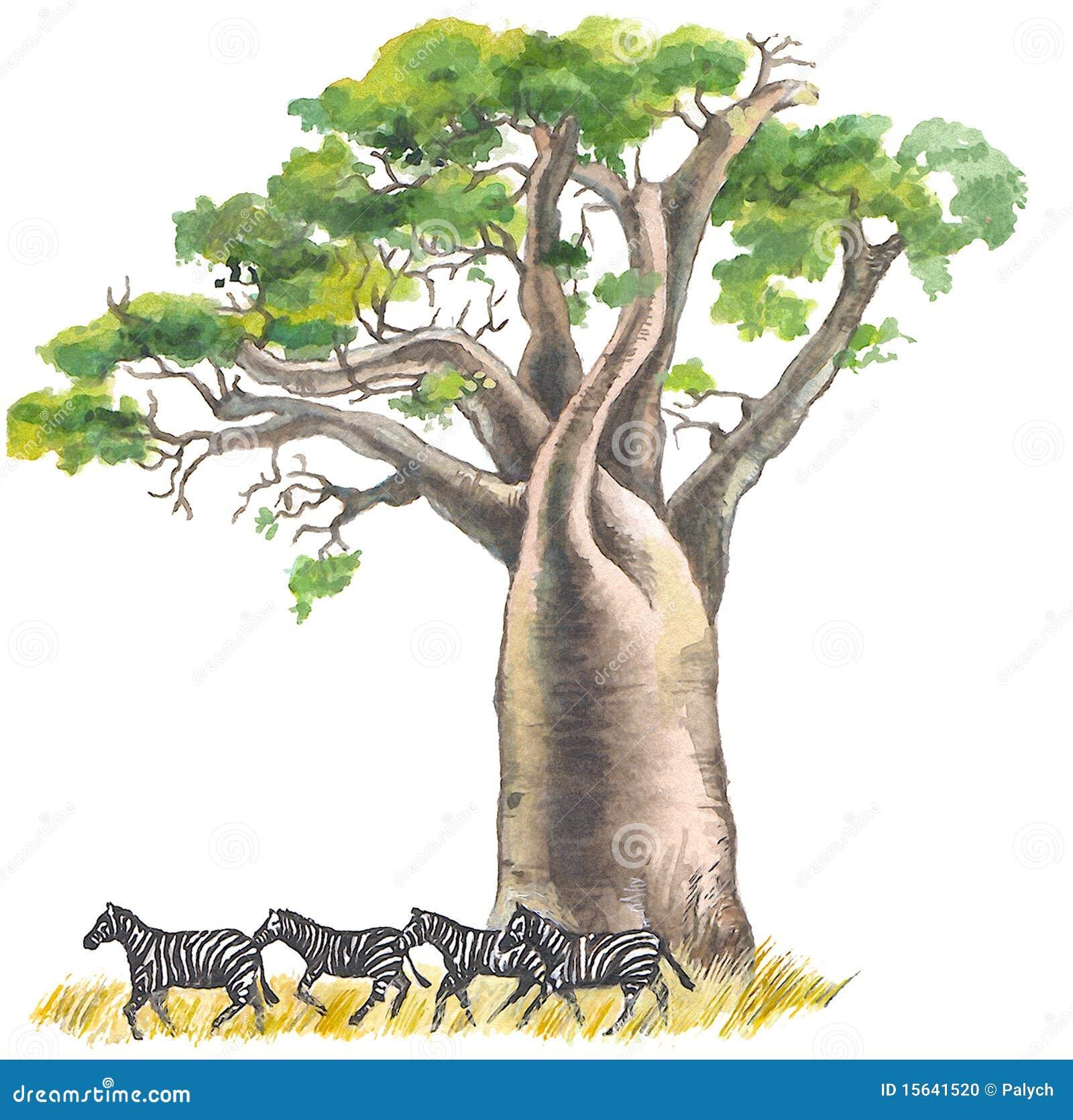 baobab stock illustration image of savanna  paper zebra print clip art border free zebra print numbers clipart