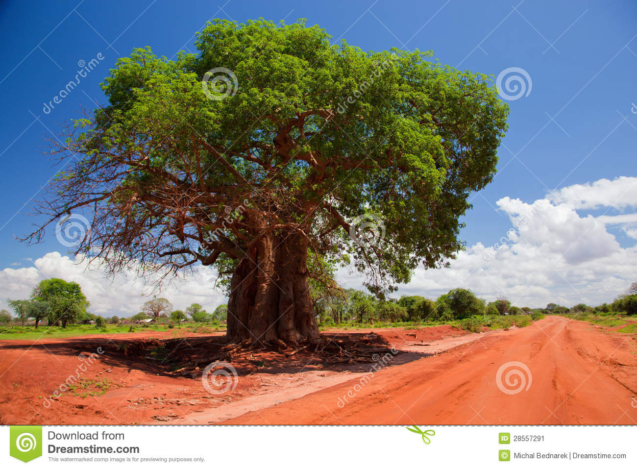 Kenya Road Sign >> Baobab Tree On Red Soil Road, Kenya, Africa Stock Image - Image: 28557291