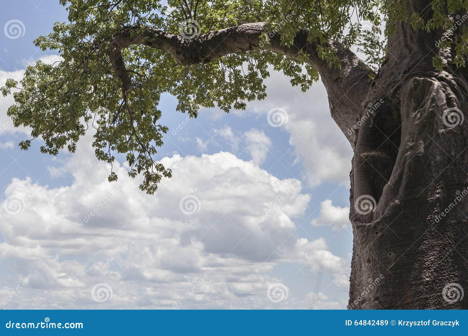 Baobabhöhle