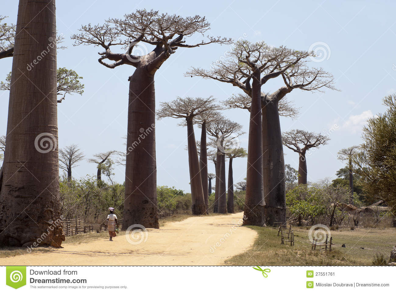 Baobabs alley