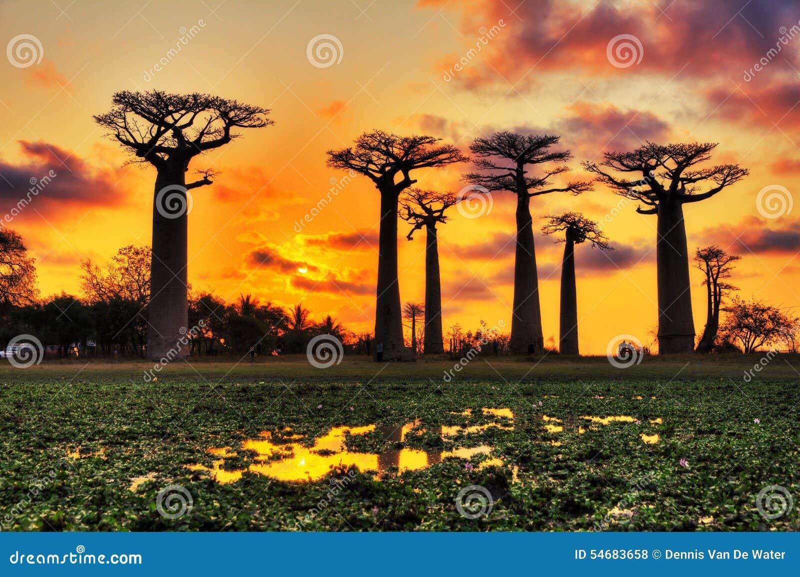 Wood Wallpaper Madagascar Vector Illustration Cartoondealer Com 11572046