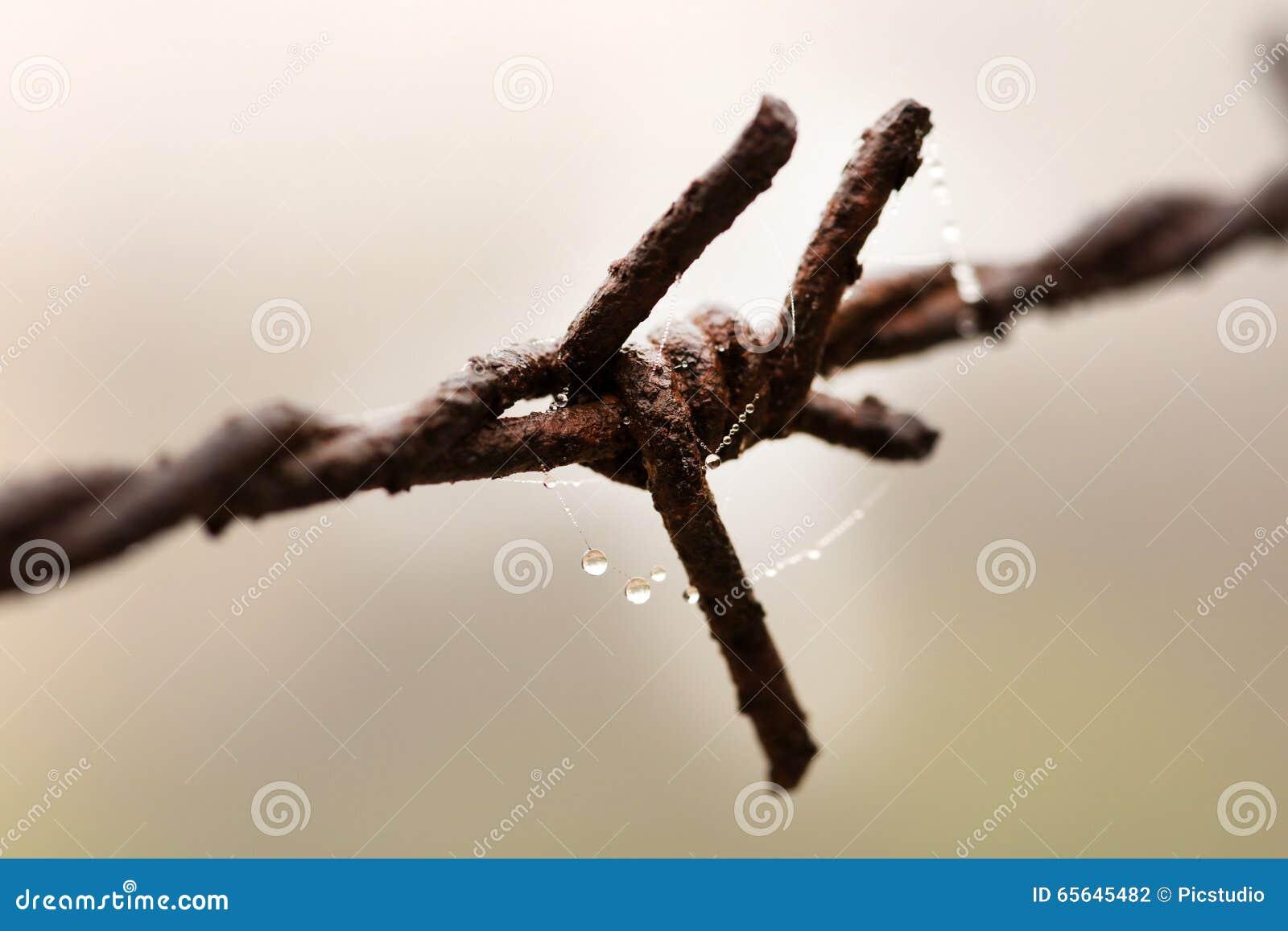 Barb Wire rouillé
