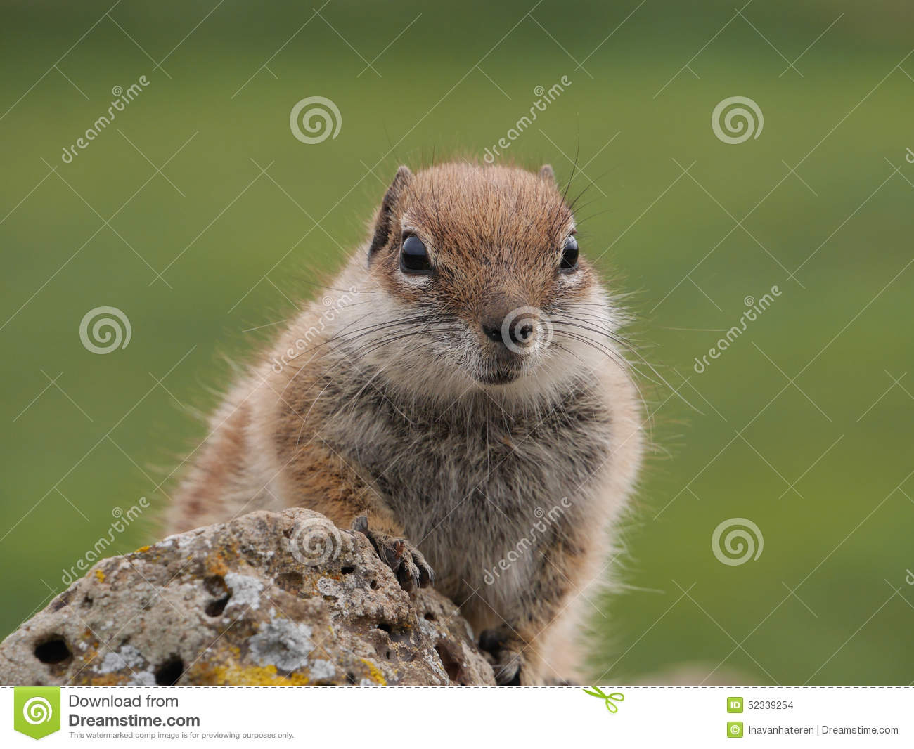 squirrel island single guys Buy squirrel island maine t-shirt: shop top fashion brands novelty at amazoncom free delivery and returns possible on eligible purchases.