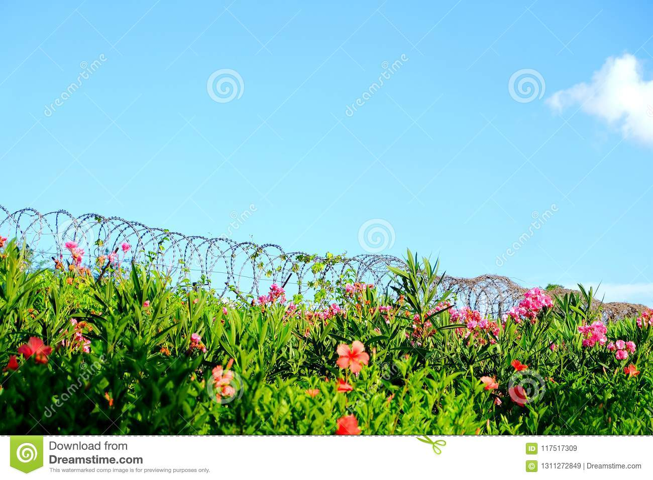 Barbed wire fence stock image. Image of wire, piles - 117517309