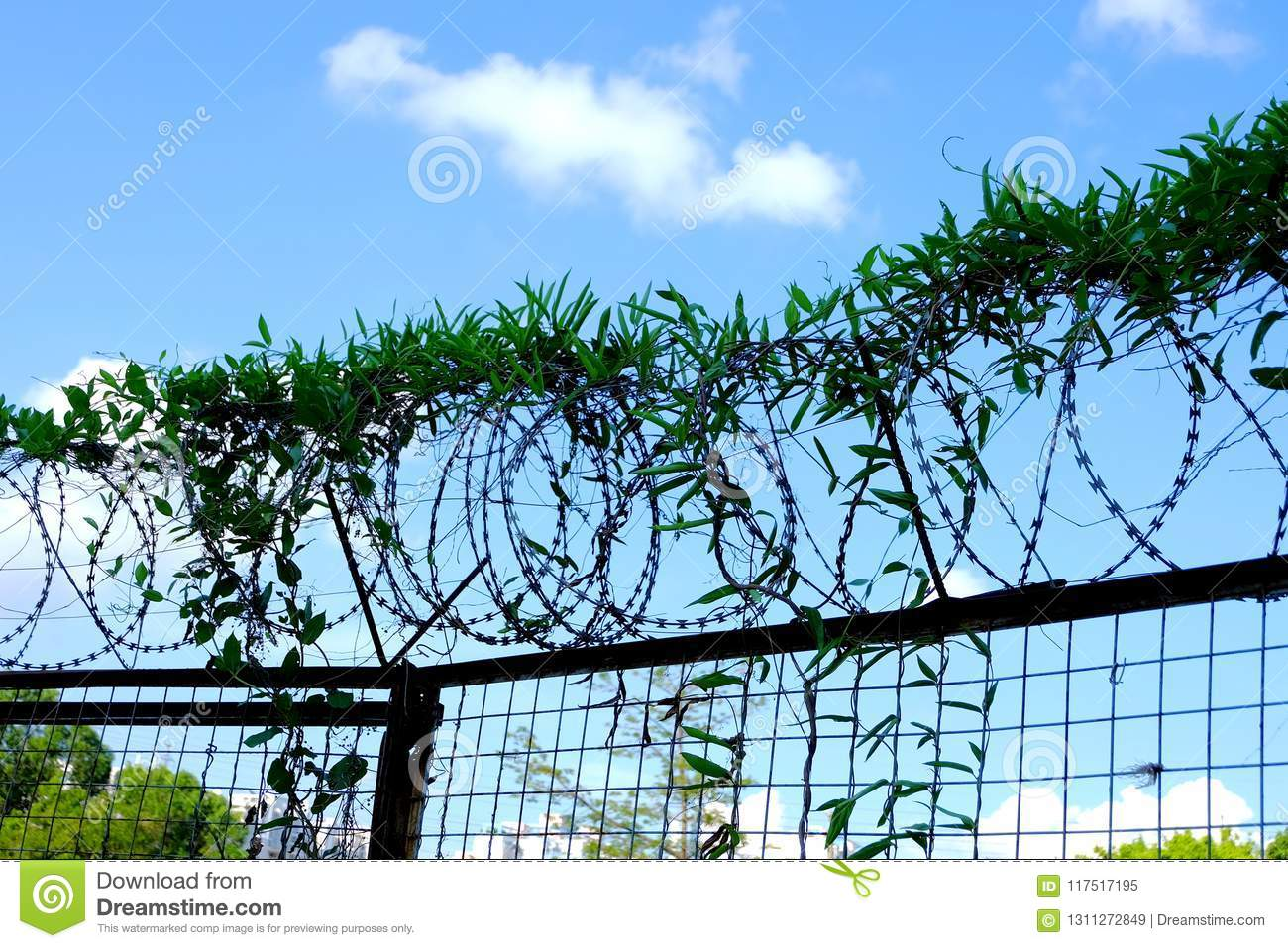 Barbed wire fence stock image. Image of terror, protective - 117517195