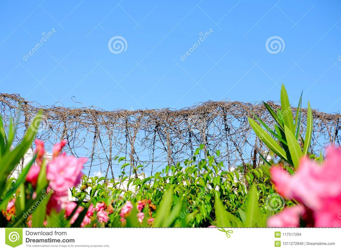 Barbed wire fence stock photo. Image of border, place - 117517294